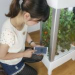 Niwa – огород под управлением смартфона