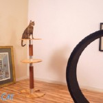 One Fast Cat – тренажер для кошки не даст ей скучать