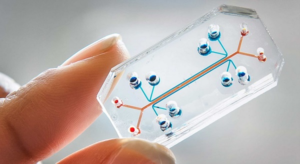 organ-on-a-chip