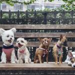 Собаки в инстаграме зарабатывают больше всех