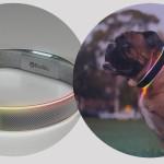 Светящийся GPS ошейник обеспечит безопасность и здоровье собаки