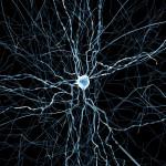 Симулятор мозга дает возможность узнать новую информацию о памяти и сне