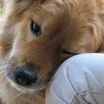 «Airbnb» для животных — Mad Paws