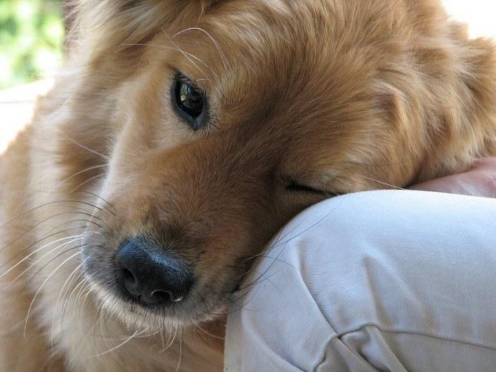 pet-dog-720x540