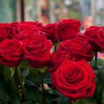 Внешность обманчива. Розы — киборги
