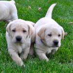 Kuddly — помощь ветеринаров онлайн