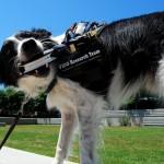 Жилет Fido позволит собакам говорить
