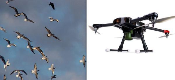 1280x700xbirdx-drones-pest-birds.jpg.pagespeed.ic.3MF-fZqD7H
