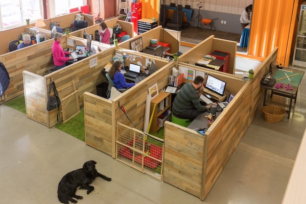 dogs-office