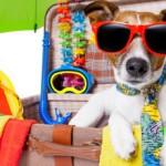 Пока вы надрываетесь на работе, собаки зарабатывают по 20 тысяч за пост в Instagram