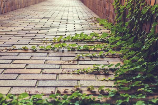 nature-path-plants-grow-rampant-large