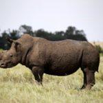 3D печать против браконьерства