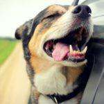 Rover.com получает 40млн на платформу по уходу за собаками