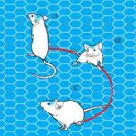 Нейроученые беспроводным способом контролируют бег мышей