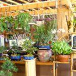 Стартап, помогающий буквально выращивать свежий воздух дома